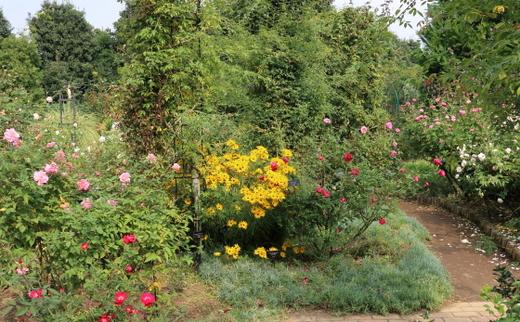 花菜ガーデンの秋の風景