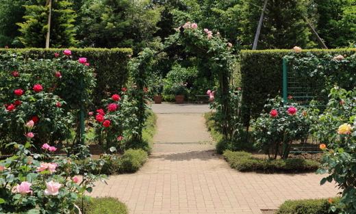 2017年春の花菜ガーデンの風景