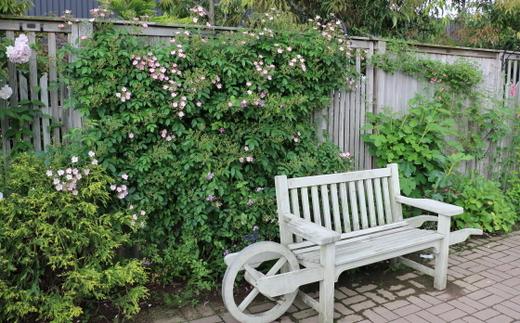 バラ園のベンチ