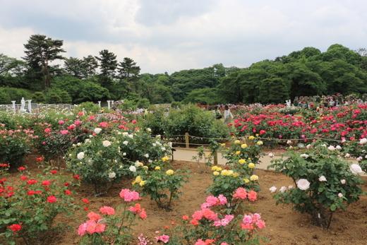 生田ばら苑の風景