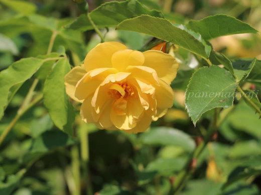 buttercup-0512.JPG