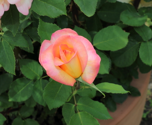 花色はオレンジ色の生地にローズピンクの覆輪