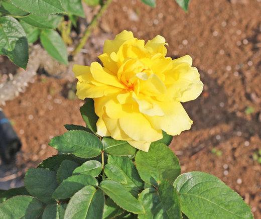 duft-gold-6483.jpg