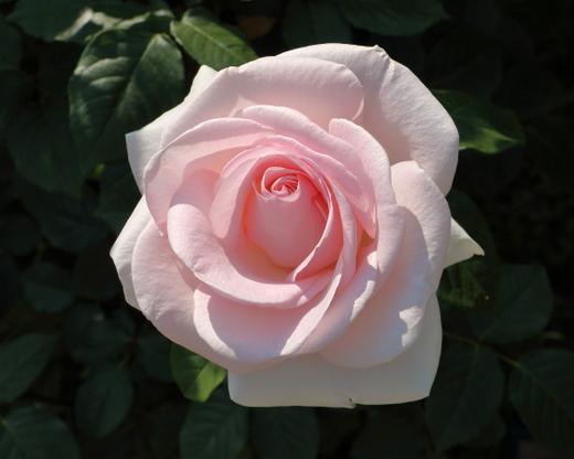 my-garden-0724.JPG