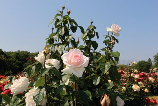 my-garden-0725.JPG