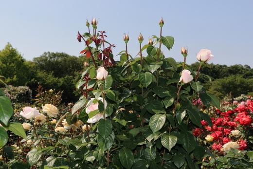 my-garden-0726.JPG
