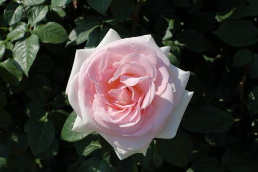my-garden-0727.JPG