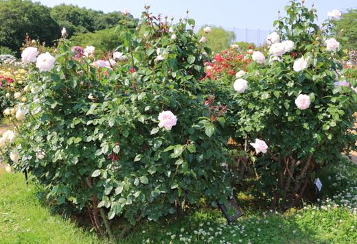 my-garden-0728.JPG