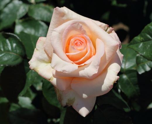 vanilla-perfume-9572.JPG