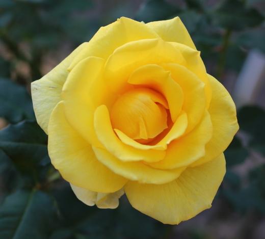 yellow-simplicity-7678.JPG