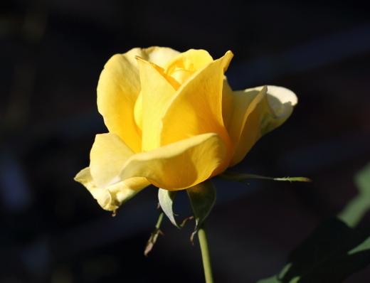 yellow-simplicity-7679.JPG
