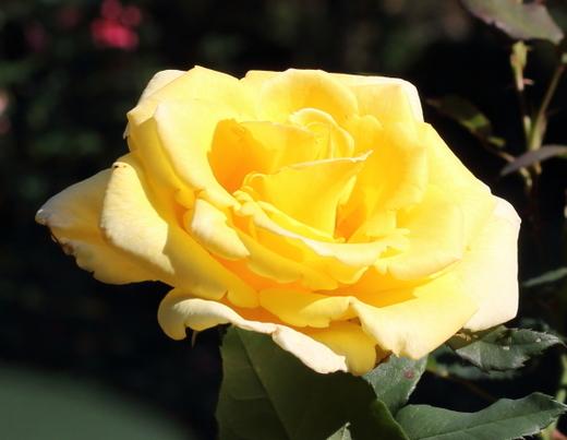 yellow-simplicity-7680.JPG