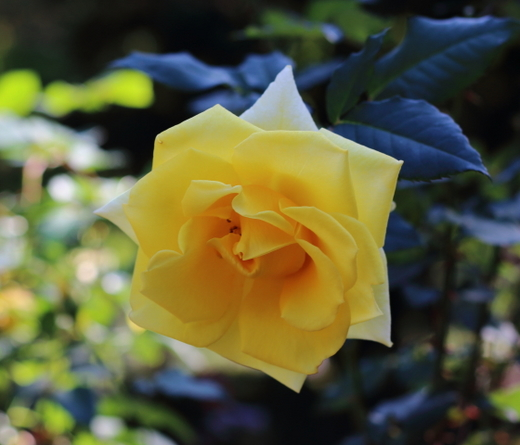 yellow-simplicity-7682.JPG