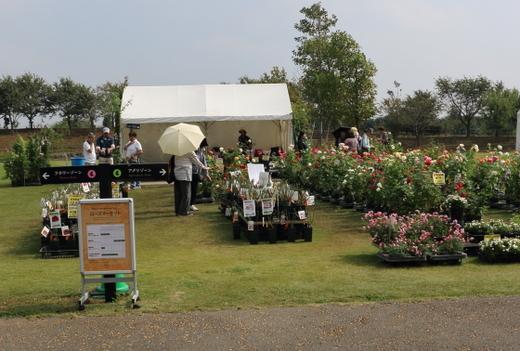 園内ではバラ苗や花木の鉢植えが販売されていた