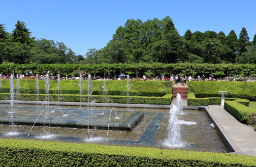 神代植物公園の風景