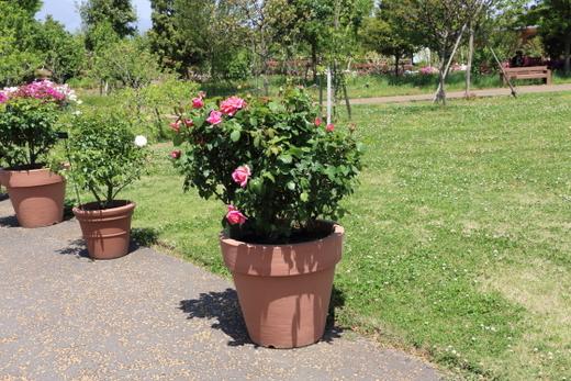 春の晴れた日に花菜ガーデンの風景