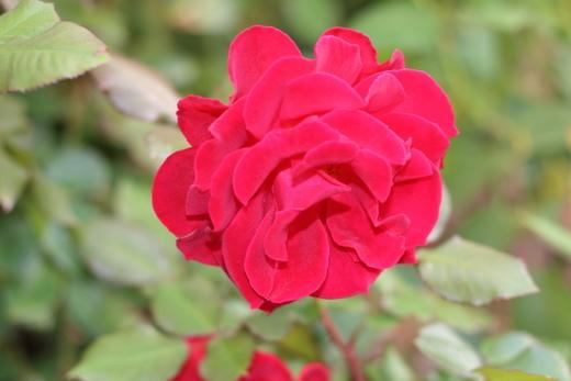 frankly-scarlet-7917.JPG