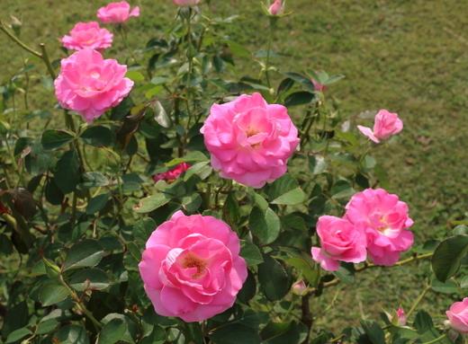 一番花の開花が始まりました