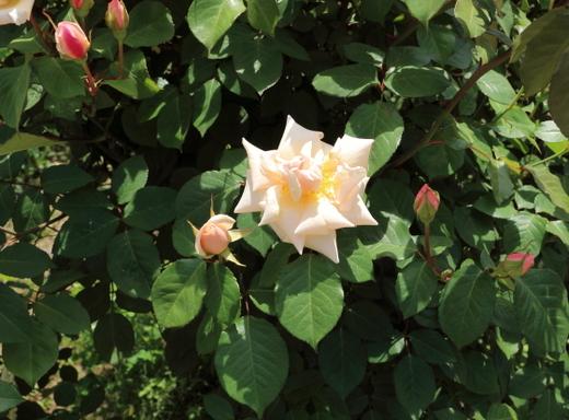 剣弁抱え咲きの花形です